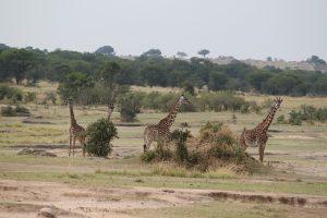 Les incontournables de la Tanzanie